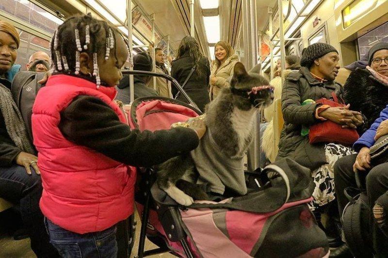 Людям нравится стильная кошка, и они не сразу догадываются о её проблеме в мире, глаза, животные, кот, кошка, милота, очки