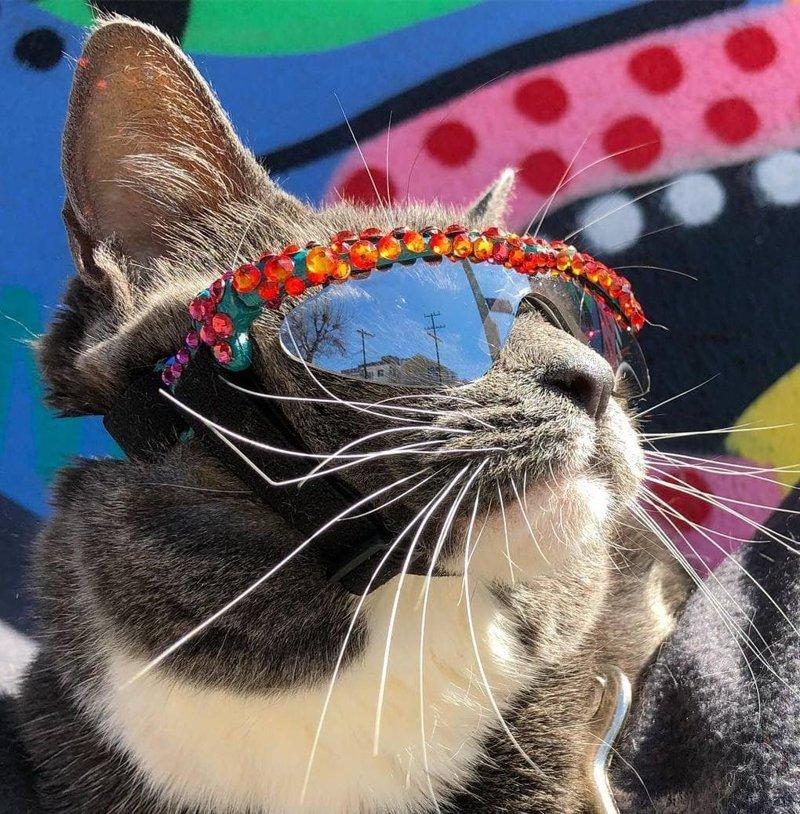Позирует для фото в мире, глаза, животные, кот, кошка, милота, очки