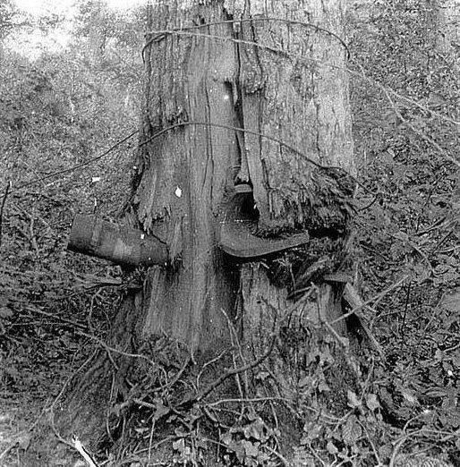 4. Боеприпасы, застрявшие в деревьях  боеприпасы, война, история, оружие, следы войны, танки, фото, эхо войны
