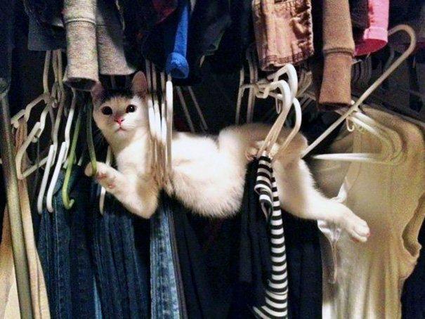 """17. """"Ты что делаешь дома так рано, человек?"""" Забавные коты, домашние животные, кот, коты, кошка, кошки, смешные  кошки, юмор"""