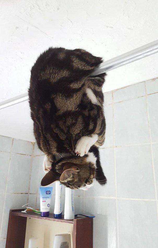 """6. """"Вот в таком виде мы обнаружили ее в ванной"""" Забавные коты, домашние животные, кот, коты, кошка, кошки, смешные  кошки, юмор"""