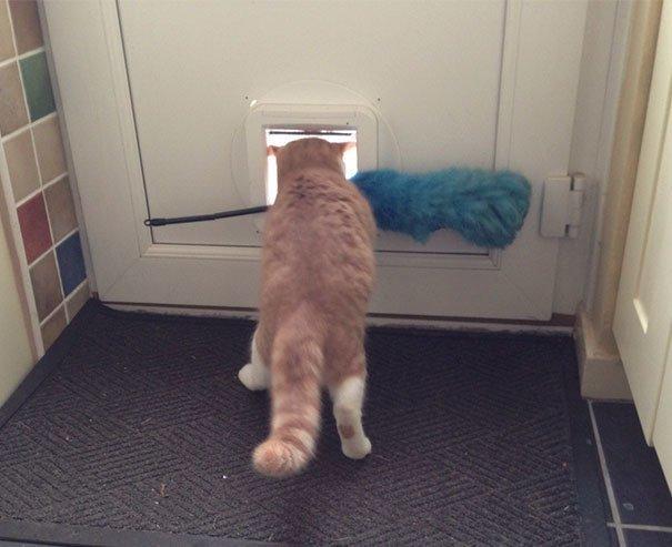 """12. """"Мой кот постоянно пытается стащить и вынести из дома метелку для пыли. Но дальше этой двери еще ни разу не ушел"""" Забавные коты, домашние животные, кот, коты, кошка, кошки, смешные  кошки, юмор"""