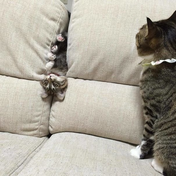 """14. """"Эй, тебя и на секунду оставить нельзя, что ли?"""" Забавные коты, домашние животные, кот, коты, кошка, кошки, смешные  кошки, юмор"""