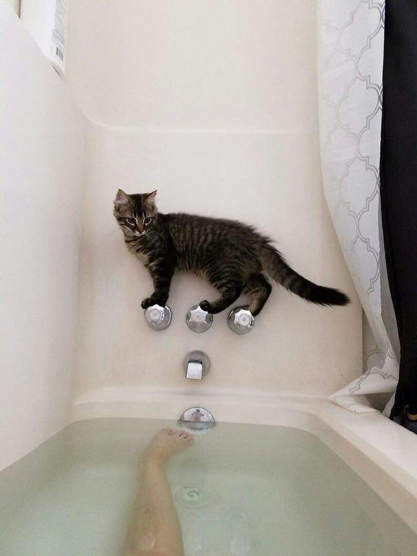26. Любопытство и кошка Забавные коты, домашние животные, кот, коты, кошка, кошки, смешные  кошки, юмор