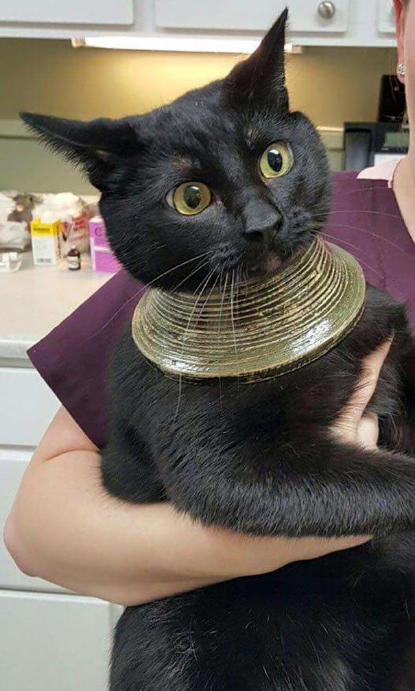 """10. """"Кошка застряла башкой в вазе, мотала ею, разбила, и осталась вот в таком украшении"""" Забавные коты, домашние животные, кот, коты, кошка, кошки, смешные  кошки, юмор"""