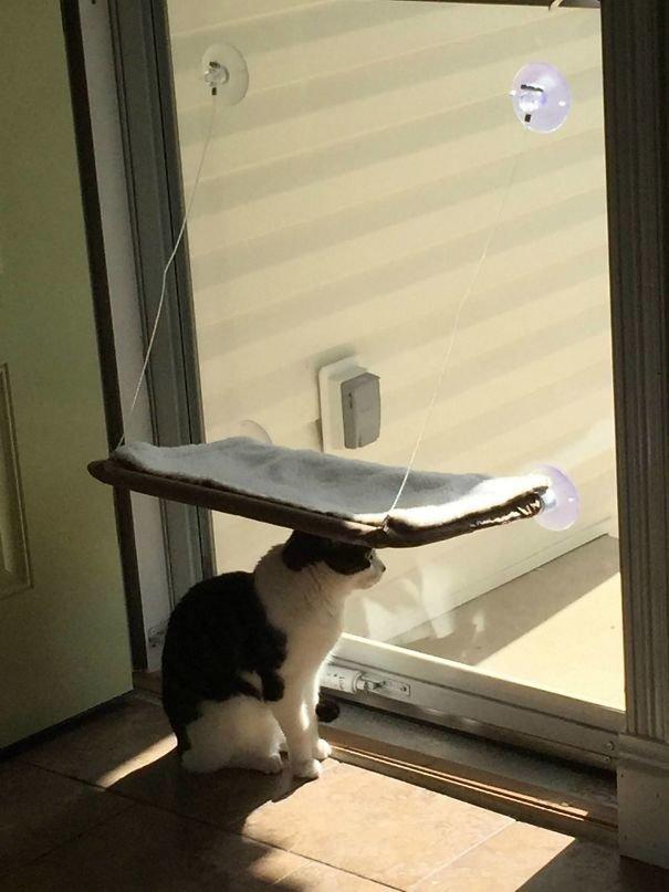 """13. """"Всё. Завязываю покупать всякие штуки для своей кошки. Ну тупая!"""" Забавные коты, домашние животные, кот, коты, кошка, кошки, смешные  кошки, юмор"""