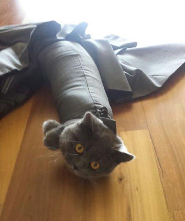 """1. """"Оставил костюм на полу. Проснулся и увидел это"""" Забавные коты, домашние животные, кот, коты, кошка, кошки, смешные  кошки, юмор"""