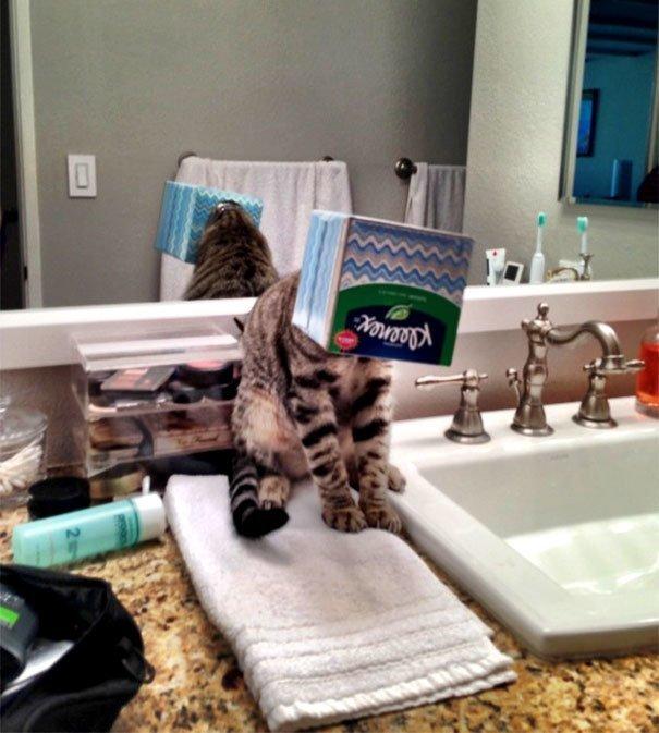 """19. """"Слышу - кошка в ванной жалобно мяукает. Захожу и вижу это"""" Забавные коты, домашние животные, кот, коты, кошка, кошки, смешные  кошки, юмор"""