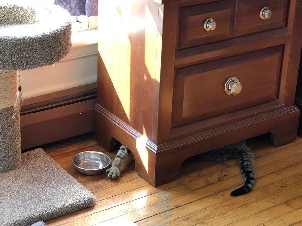 """24. """"У моего кота что-то с головой. Он пьет воду, сидя под комодом и макая лапу в миску"""" Забавные коты, домашние животные, кот, коты, кошка, кошки, смешные  кошки, юмор"""