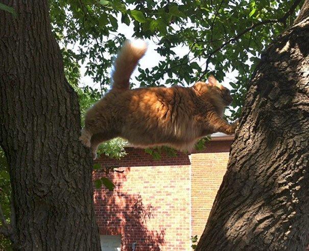 """3. """"Пришлось помогать ему спуститься. Вот идиот!"""" Забавные коты, домашние животные, кот, коты, кошка, кошки, смешные  кошки, юмор"""