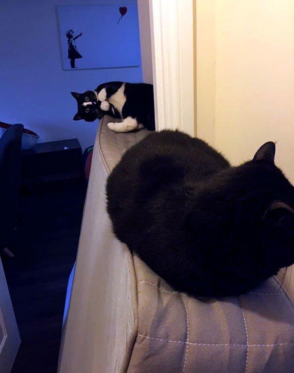 """29. """"Один из моих котов взрослый и высокомерный, а второй - идиот. Угадайте, кто где"""" Забавные коты, домашние животные, кот, коты, кошка, кошки, смешные  кошки, юмор"""