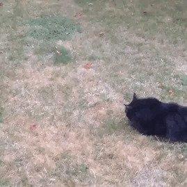 Забавные коты, домашние животные, кот, коты, кошка, кошки, смешные  кошки, юмор