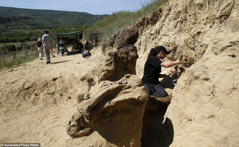Фермеры наткнулись на останки древнего «слона» ynews, находка, палеонтология, раскопки, слоны