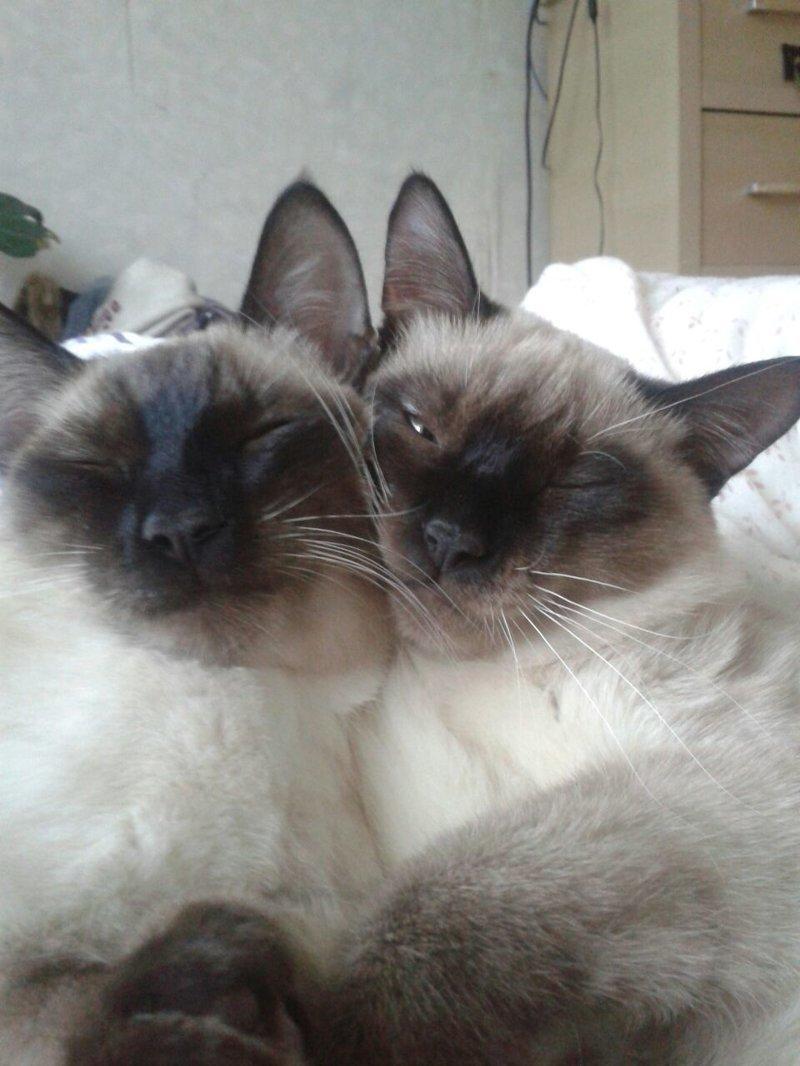 День рождения славной пары коты, праздник, счастье