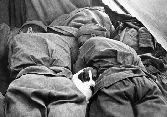1. Сны о победе и мире Велика Отечественная война, история, фотографии