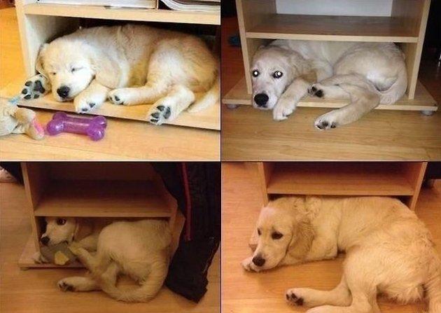 Пёс вырос, а привычка осталась зависимости, зависимость, привычки, прикол, странная привычка, юмор