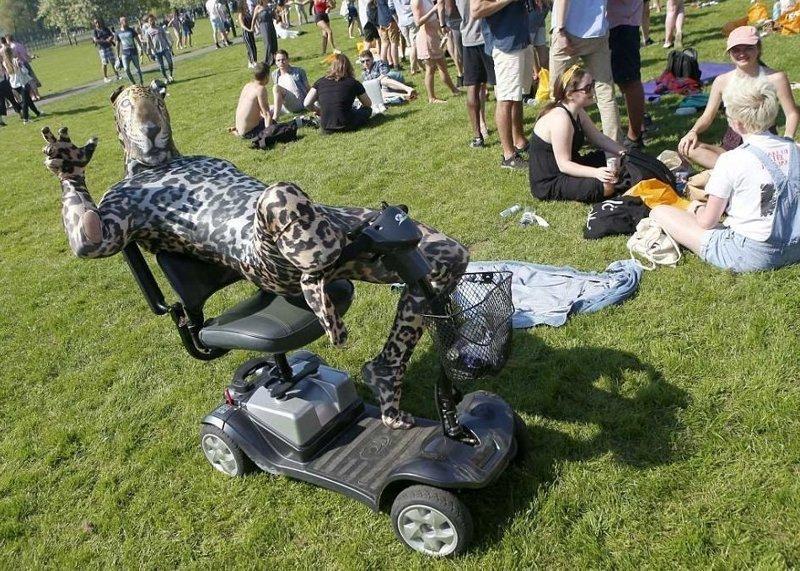 Гепард на электроскутере разъезжает по парку  Кембриджский университет, великобритания, вечеринка, мир, пьянка, студент, фото