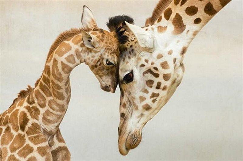 Зверомама животные, мамы, факты