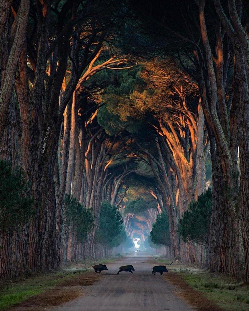 Tuscany, Italy красивые места, мир, планета, природа, путешествия