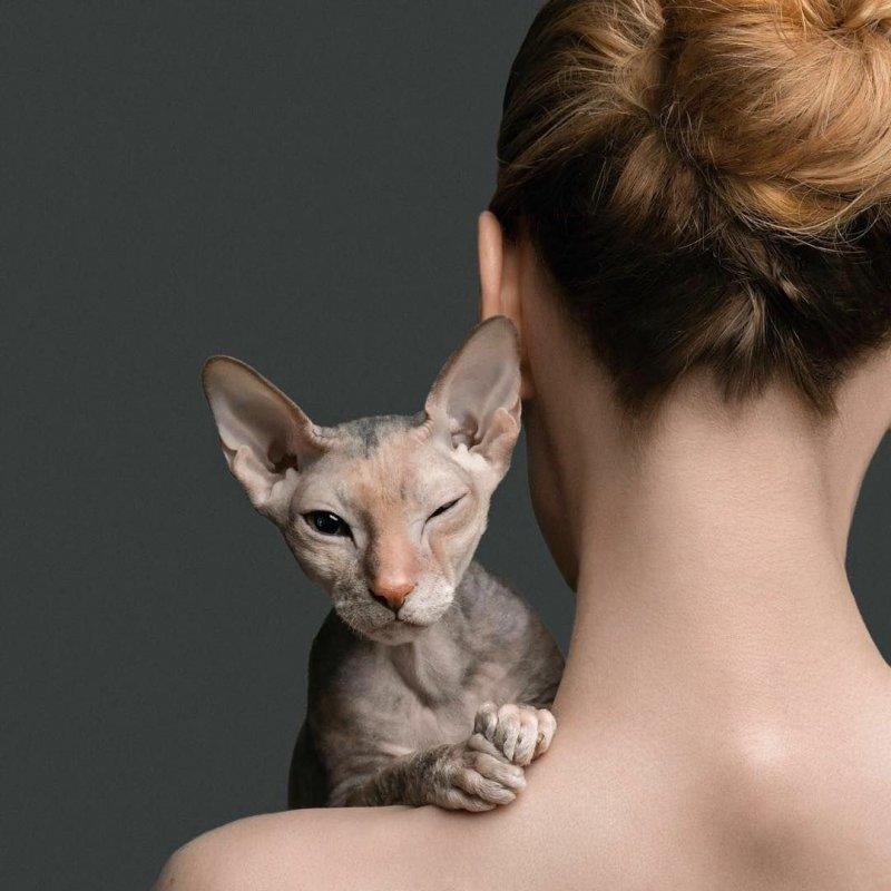 Сфинкс на плече день, животные, кадр, люди, мир, снимок, фото, фотоподборка