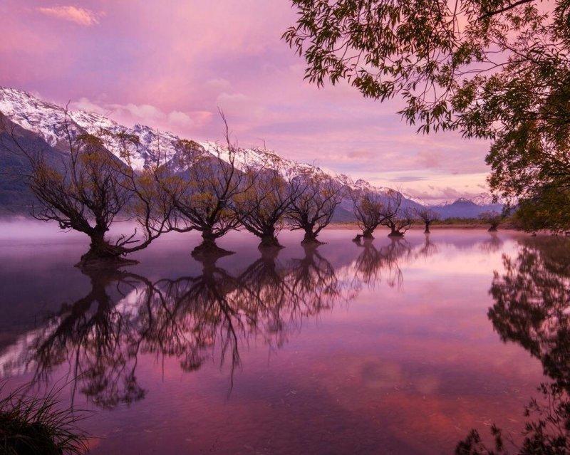 Новая Зеландия день, животные, кадр, люди, мир, снимок, фото, фотоподборка