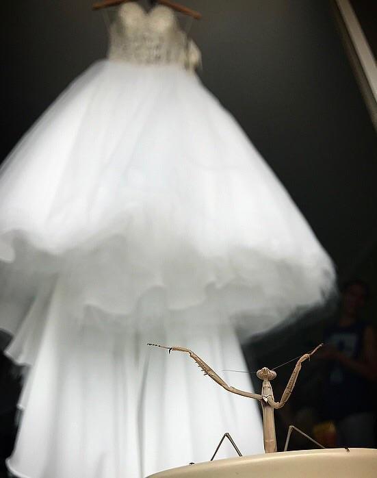 На фоне свадебного платья день, животные, кадр, люди, мир, снимок, фото, фотоподборка