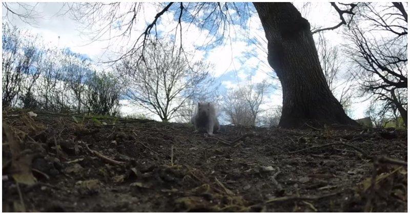 Белка украла у канадца камеру и сняла свой эпичный побег на видео белка, видео, животные, канада, побег, прикол, природа, юмор