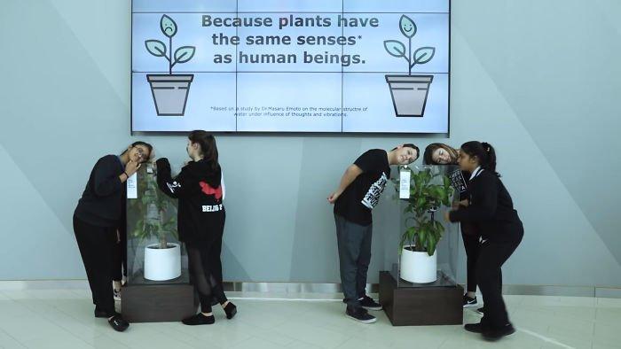 В одной из школ ОАЭ поставили два одинаковых растения  ikea, растение, результат, травля, ученик, школа, эксперимент