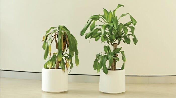 Наглядный результат эксперимента  ikea, растение, результат, травля, ученик, школа, эксперимент
