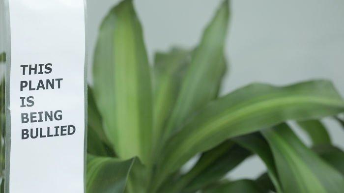 Ошеломляющий результат эксперимента: IKEA попросила школьников ругать растение в течение 30 дней ikea, растение, результат, травля, ученик, школа, эксперимент