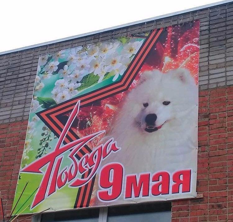 Кузбасский фермер своеобразно поздравил ветеранов с 9 мая 9 мая, ynews, кузбасс, поздравления, праздник, собаки, фото