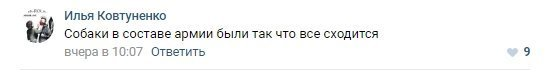 Но есть и те, кто рассмотрел в этом положительный контекст 9 мая, ynews, кузбасс, поздравления, праздник, собаки, фото