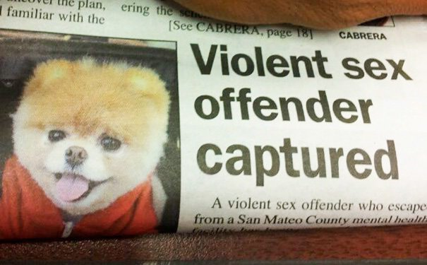 «Пойман жестокий насильник!» приколы, тексты, фото