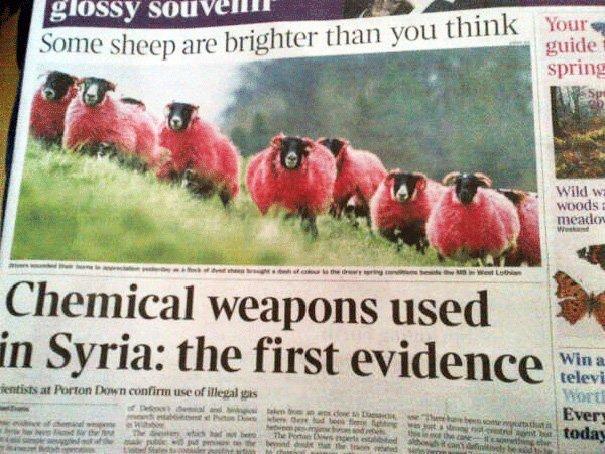 «Некоторые овцы ярче, чем вы думаете». Ниже — «В Сирии было применено химическое оружие: первые свидетельства». приколы, тексты, фото