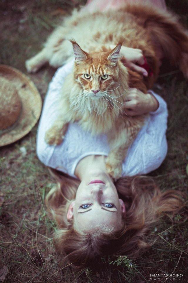 16 мейн-кунов, в сравнении с которыми ваш котик будет смотреться крошечным коты, кошки, мей кун