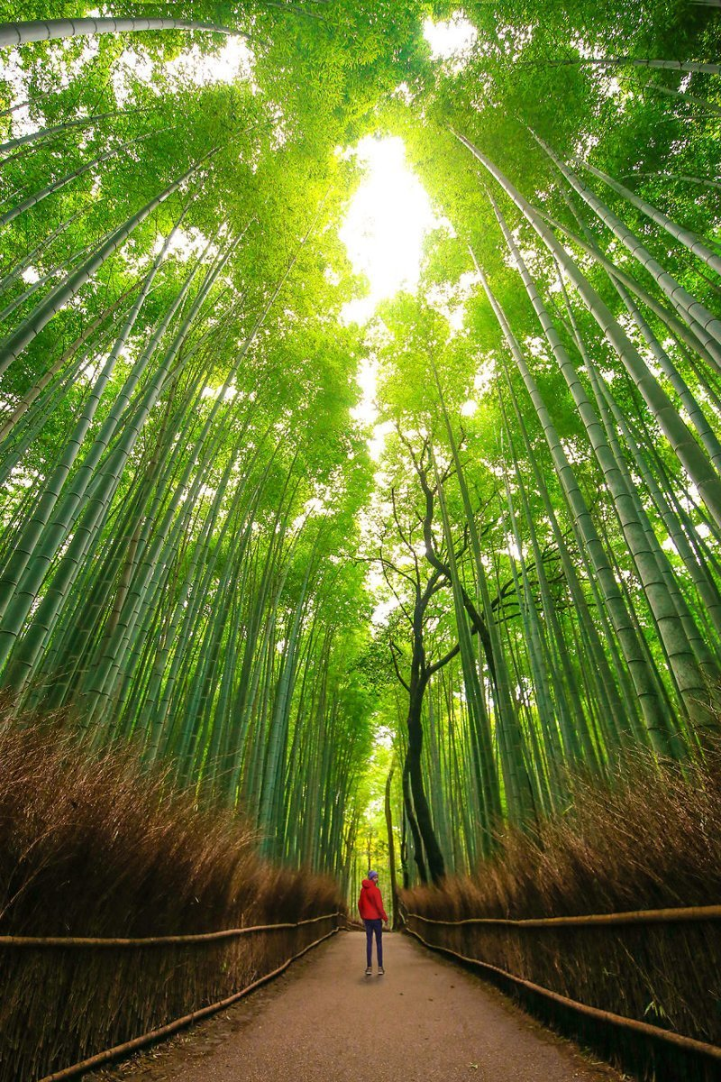Киото, Япония Кругосветное путешествие, интересно, мир в кармане, от Земли до Луны, приключения, путешествия, страны и города, увлекательно