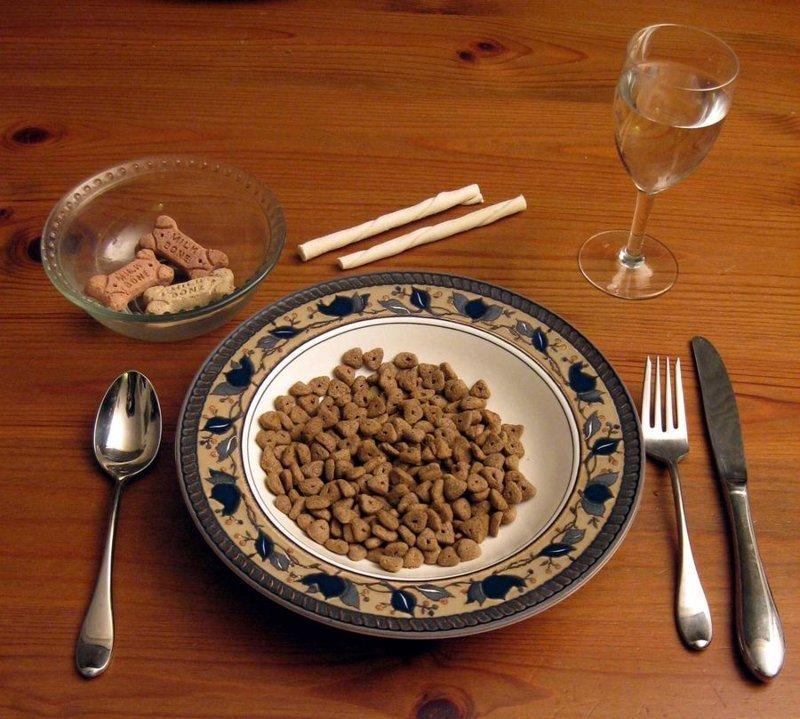 Дегустатор собачьей еды профессия, специальность, странное
