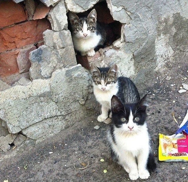 Очень колоритные уличные коты город, домашние животные, жизнь на улице, кот, эстетика