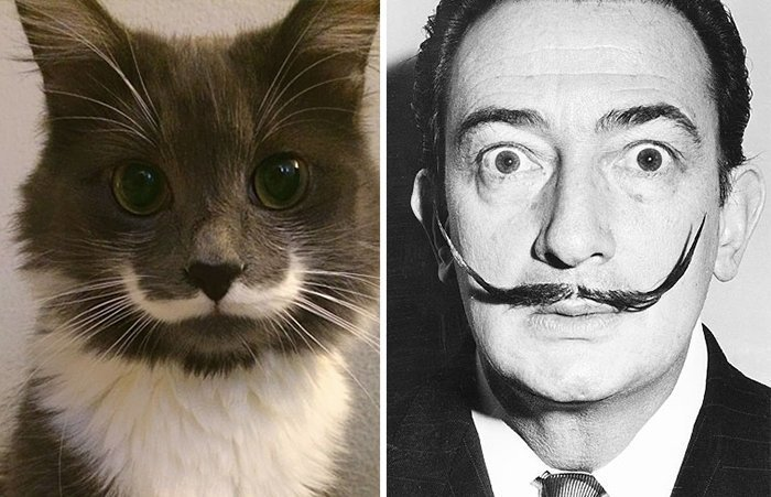 Коты-двойники животные, фотографии, юмор