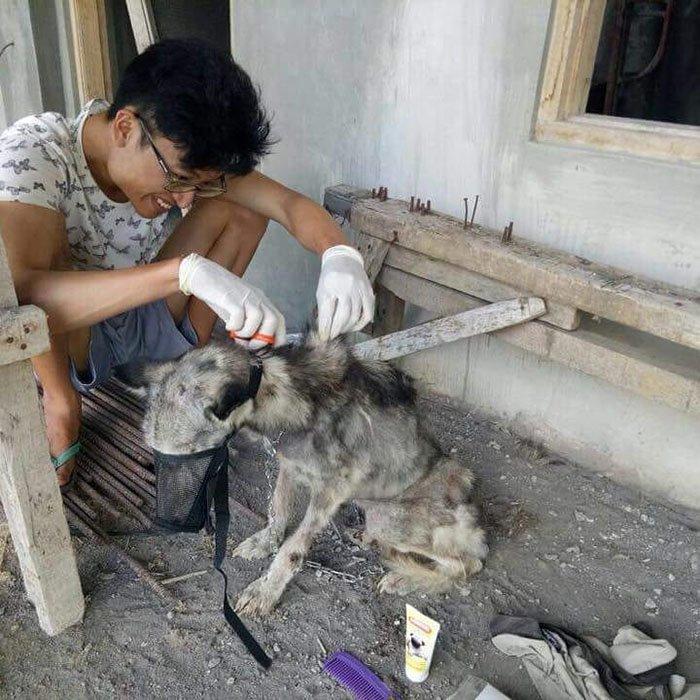 Она так исхудала, что были видны кости бали, животные, история, собака, спасение, фото, хаски