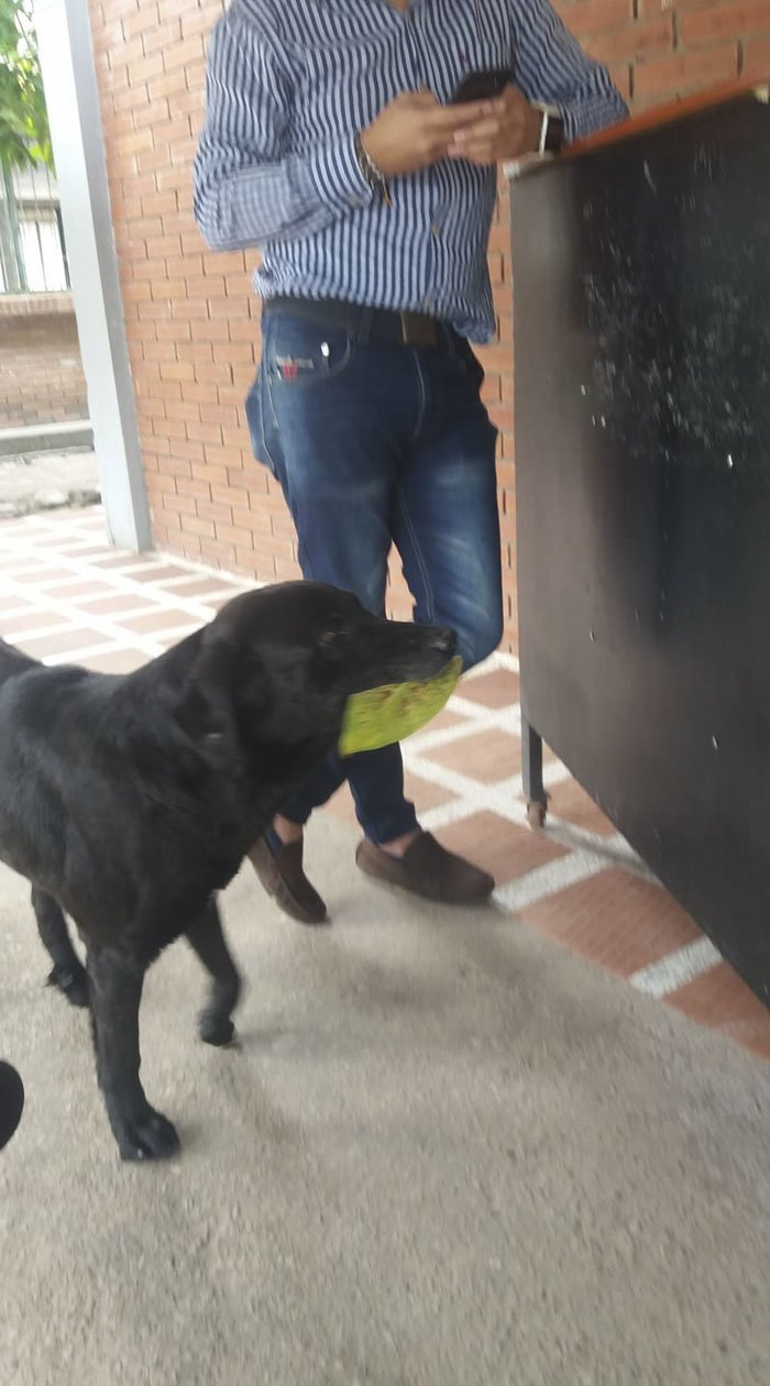 Студенты часто покупают печенье в местном магазине. Наблюдая за тем, как они отдают продавцу деньги, и взамен получают еду, пёс разработал хитрый план! гениально, животные, забавно, забавные животные, истории, прикол, собака, собаки