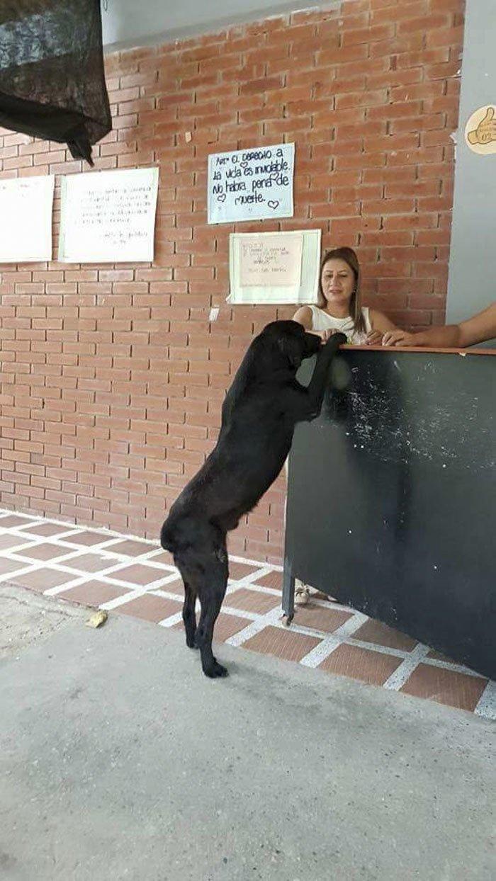 """""""Теперь он каждый день приходит за печеньем, — говорит работница магазина, — и всегда оплачивает покупки листьями"""". гениально, животные, забавно, забавные животные, истории, прикол, собака, собаки"""