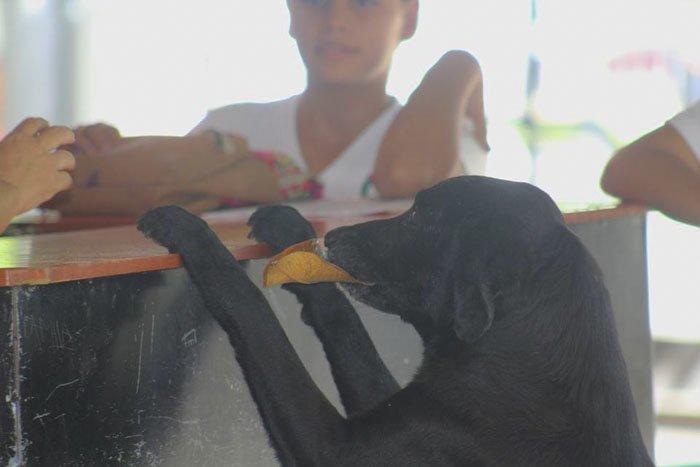 Сообразительный пёс научился покупать себе еду. Но его валюта растёт на деревьях! гениально, животные, забавно, забавные животные, истории, прикол, собака, собаки