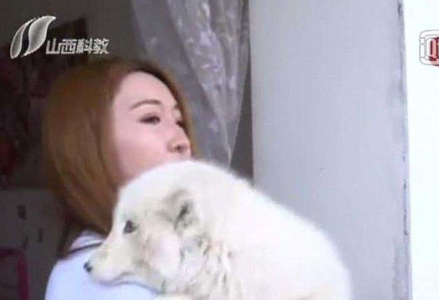 Хозяйка была в шоке, узнав, что выросло из ее щенка! домашние животные, зоомагазин, лиса, не повезло, неприятный сюрприз, обман потребителя, песец, японский шпиц