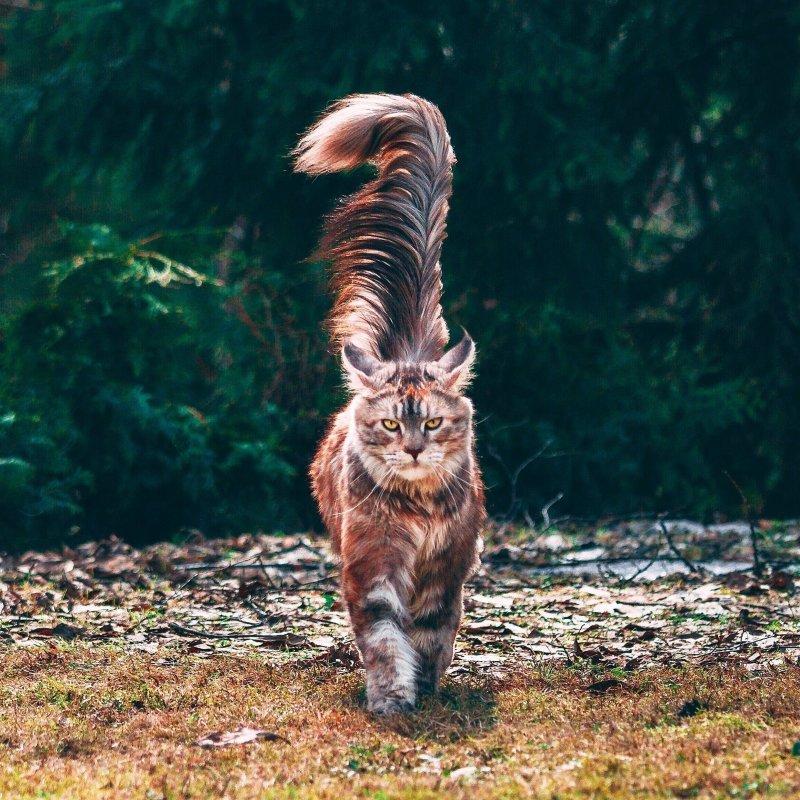 Фотоподборка за 11.05.2018 день, животные, кадр, люди, мир, снимок, фото, фотоподборка