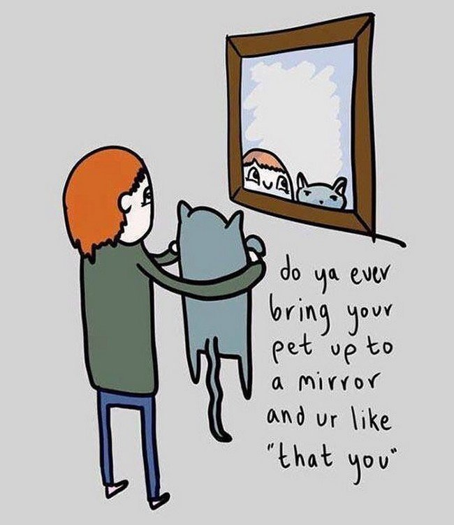 9. Держишь котика у зеркала, чтобы тот видел, какой он красивенький! домашний питомец, животные, кот, прикол, юмор