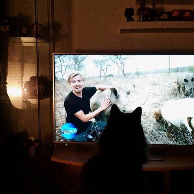 16. Телевизор, в основном, смотришь вот так. Кому нужен этот большой экран?! домашний питомец, животные, кот, прикол, юмор