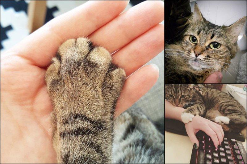 20 диких вещей, которые ты тайно делаешь со своим котиком домашний питомец, животные, кот, прикол, юмор