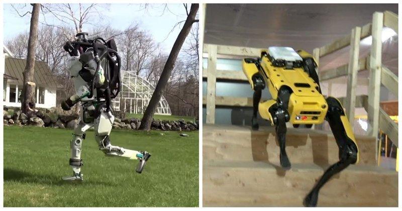 Роботов Boston Dynamics научили бегать трусцой по траве и самостоятельно ориентироваться Boston Dynamics, SpotMini, атлас, видео, робот, робототехника, роботы