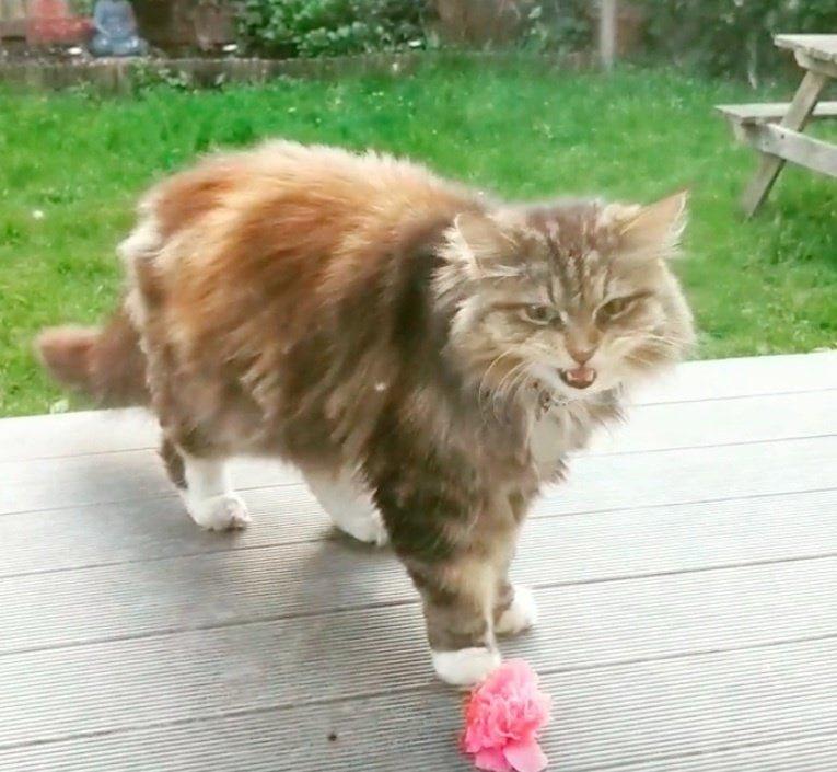 Рози рассказывает, что была польщена, ведь она раньше не видела, чтобы кошки приносили что-то, кроме мёртвых мышей в мире, история, люди, поклонник, цветы